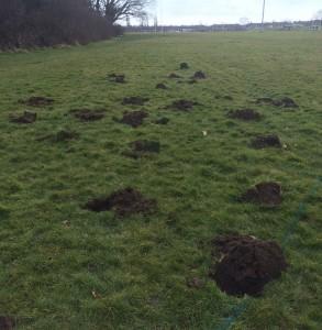 Planting Areas