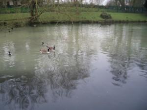 water-birds-1