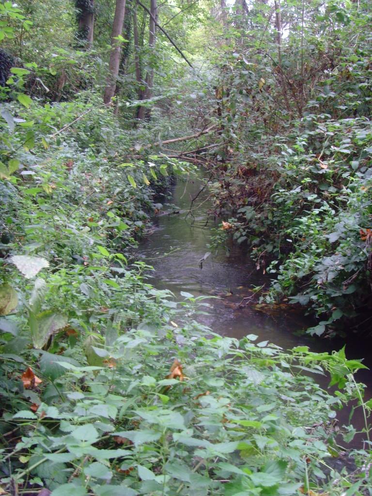 A dense vegetative canopy prevents aquatic plant growth