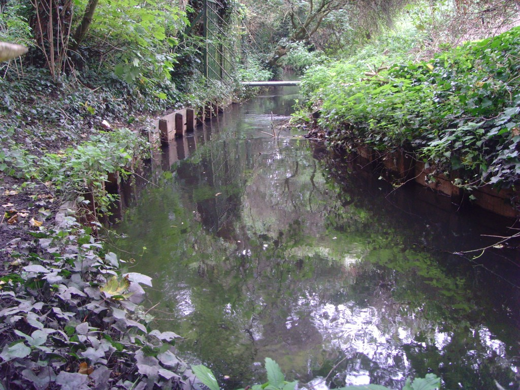 Wooden banks and channelised nature of the stream