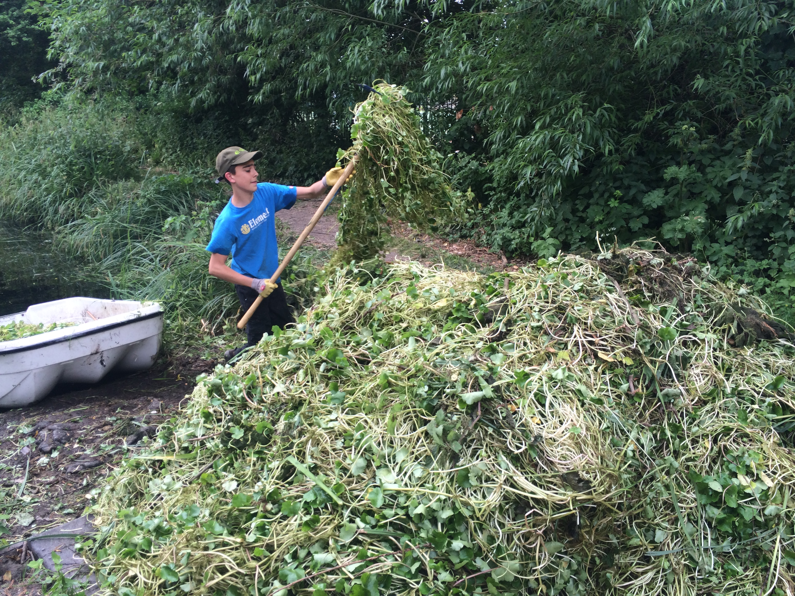 floating pennywort | The Wandle Trust