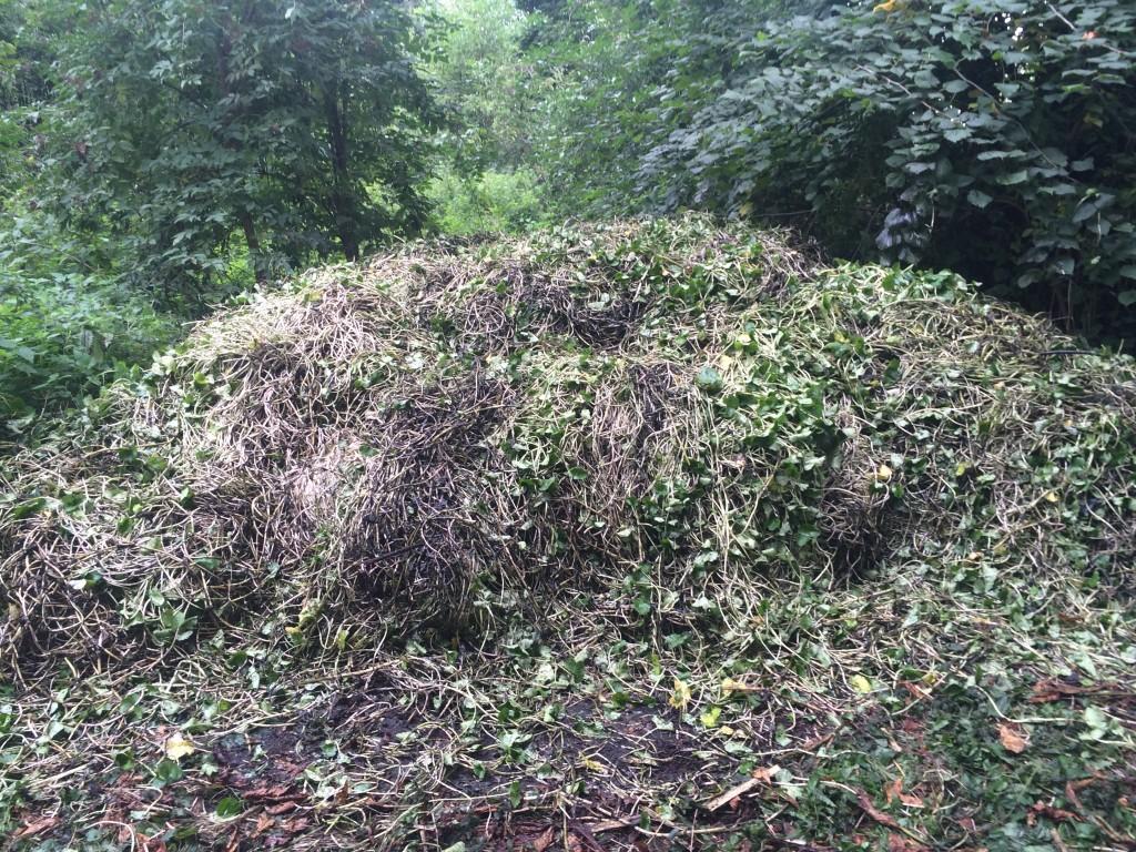 Pennywort Pile