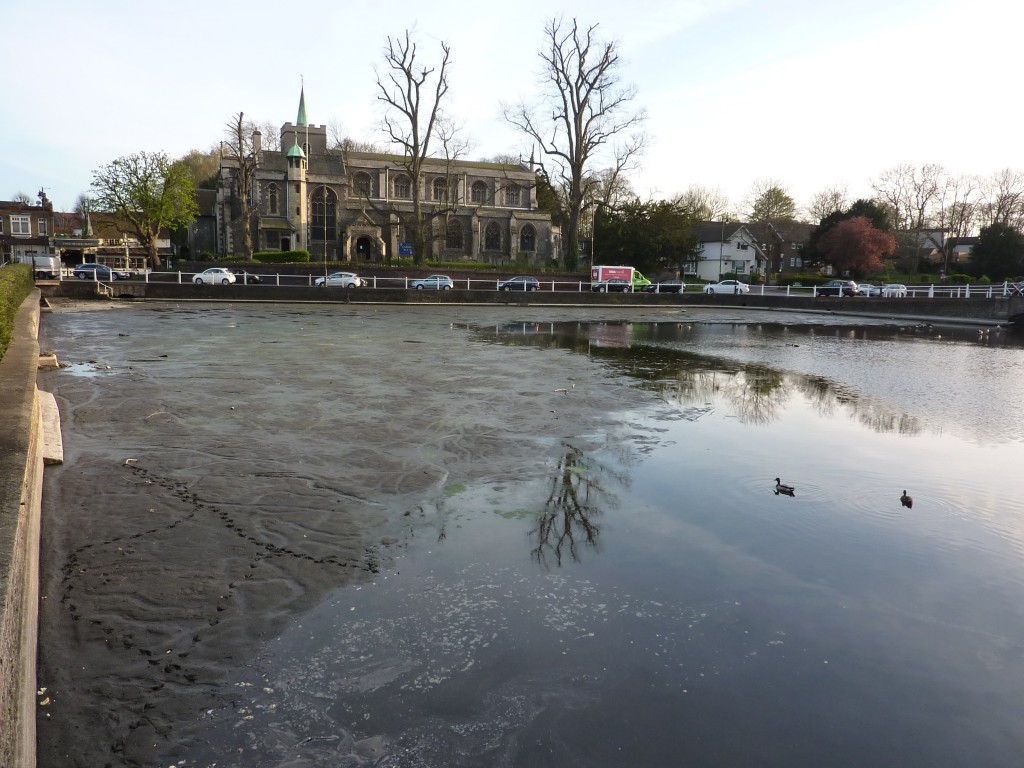 Carshalton Ponds 1 030417